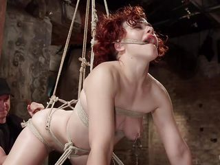 hogtied wench has her holes stuffed
